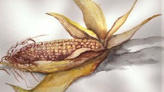 How to draw a realistic corn! |Maci| HD| Drawing