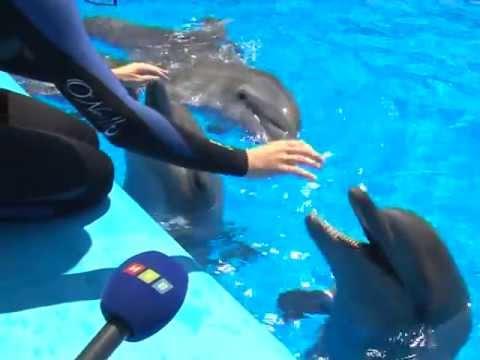 Dolphin самый прибыльный советник форекс