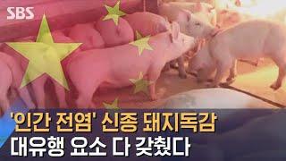 인간도 감염되는 돼지독감,