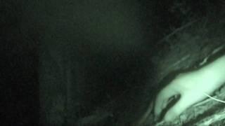 衝撃映像 【恐怖】 女の子と肝試し中に‥ thumbnail