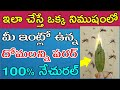 How to Prevent Mosquitoes at Home || Natural Masqito Repellent || How to Kill Masqitoes