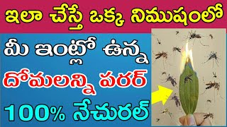 How to Prevent Mosquitoes in home | Natural Masqito Repellent in Telugu | How to Kill Masqitoes