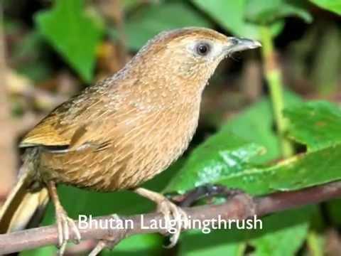 Bird Watching in Bhutan