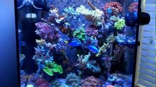34 Gallon Solana Sps Reef