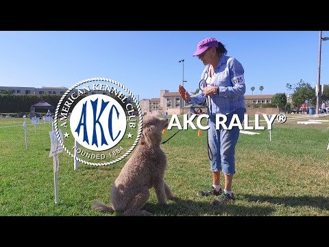 AKC Rally® | Intro to Dog Sports