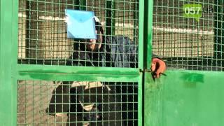 Как в харьковском приюте для животных готовятся к зиме