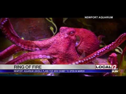 Newport Aquarium announces Ring of Fire exhibit