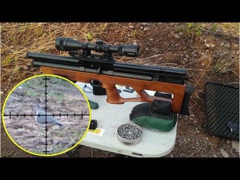 Cacera y Control de Plagas Con Rifle PCP Vulcan Calibre .25 - Hunting  and Pest Control.