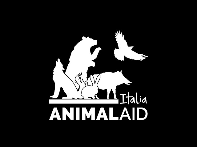 Campagna Abbandono 2020 Animal Aid italia