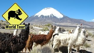 Voyage au Chili Parc national Lauca Maryse & Dany © Youtube