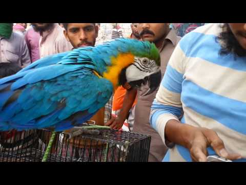 SUNDAY BIRDS MARKET IN KARACHI