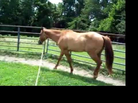 High San Peppy High Brow Hickory colt - YouTube