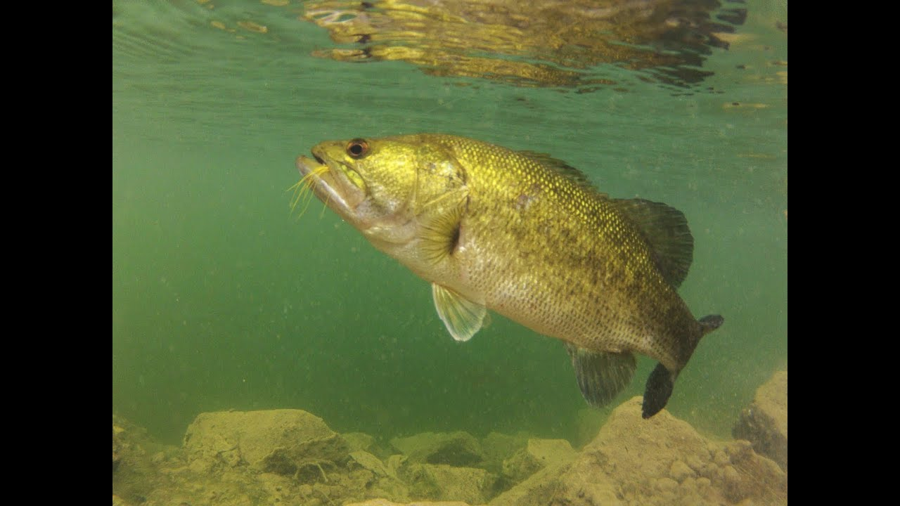 Florida Bass Fishing - cool under water release footage ...