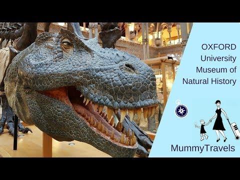 Dinosaurs, bears and shrunken heads - visiting Oxford University Museum