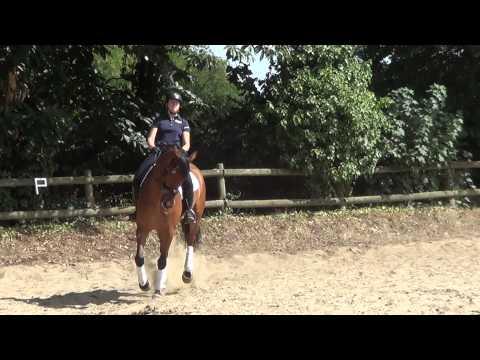 Magnifique cheval de dressage ++ balade et CSO