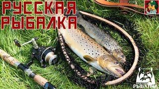 Російська Рибалка 4 - Гонитва за котушкою (Накопичуємо на ''Голду S80'')