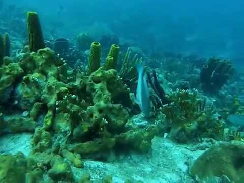 Plongées Grenadines