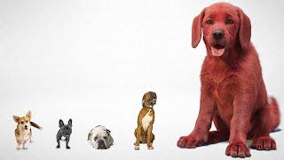 CLIFFORD THE BIG RËD DOG First Look Trailer (2021)
