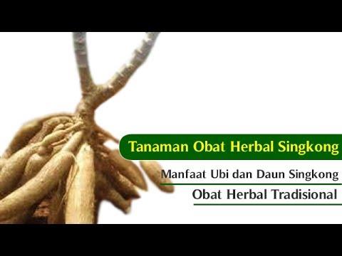 Tanaman Obat Herbal Tradisional: Manfaat Ubi dan Daun Singkong untuk Obat Herbal