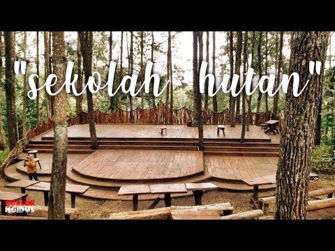 panggung-sekolah-hutan-||-hutan-pinus-sari-mangunan