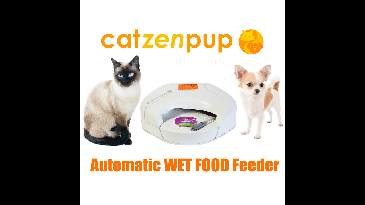 cats updates feeders feeder automatic power automated raspberry cat s bryan img blog them for david pi
