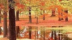 Autumn Leaves - Ferrante and Teicher
