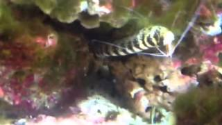 Alf Museum Fish Tank