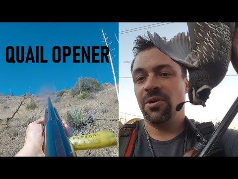 Solo Public California Quail Hunt ► Kamikaze Dive