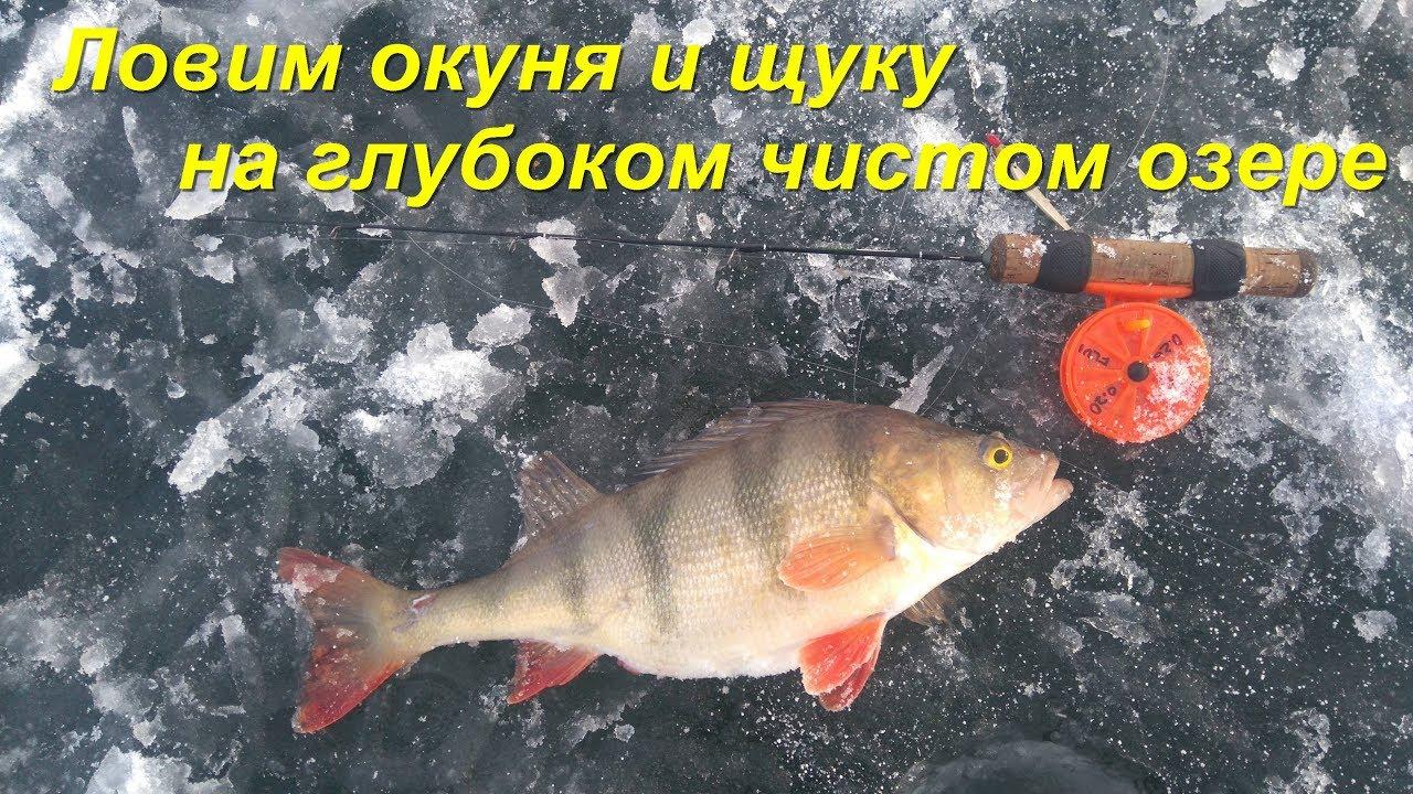 Зимняя рыбалка.Ловим окуня и щуку на глубоком чистом озере.