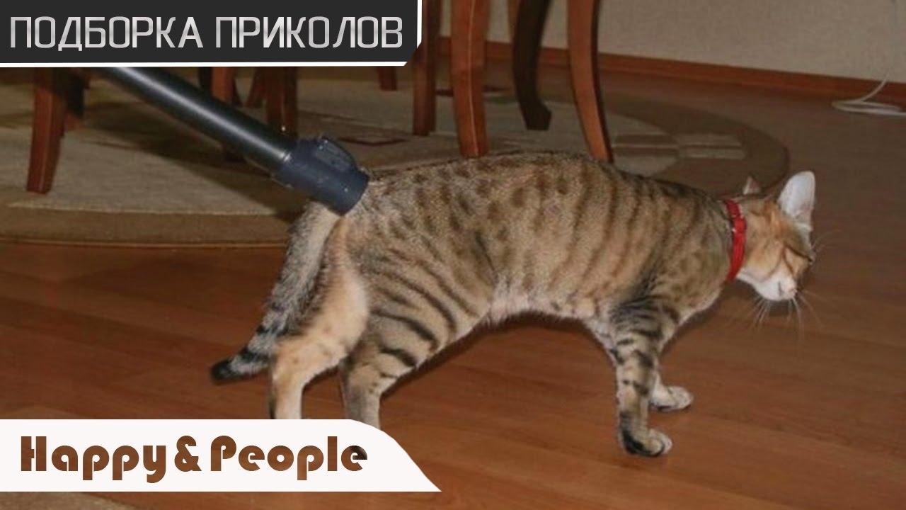 САМЫЕ СМЕШНЫЕ ПРИКОЛЫ с Котами 2019! Смотреть Всем! ДО СЛЕЗ! [Смотреть Ржачные Видео Приколы про Животных]