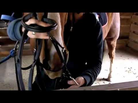 How to tack up a horse part II
