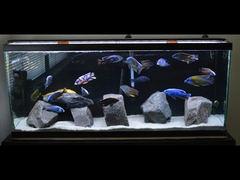 African Cichlids | New Rock Scape | Craigslist Fish Score