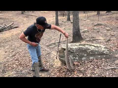 Catching and Bagging 6-foot Rattlesnake