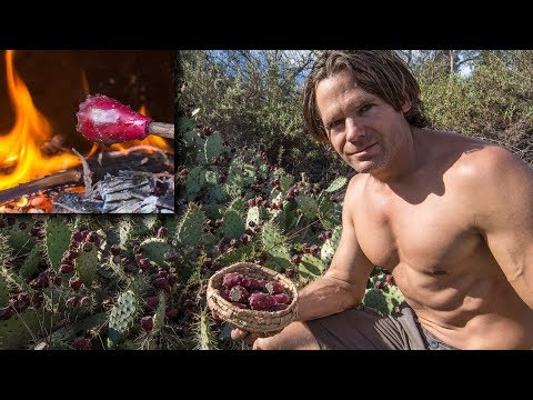 Safe Primitive Prickly Pear Harvest