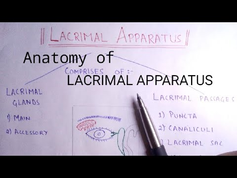 Anatomy of Lacrimal Apparatus || Handwritten Notes ||