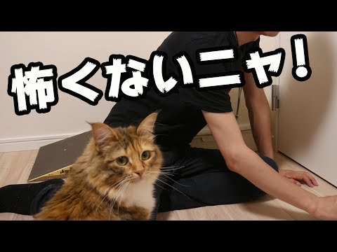 魔物が猫に襲いかかる・・・