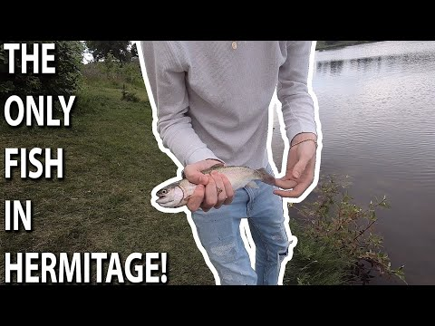 Should You Fish Hermitage Park???