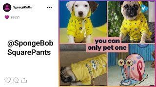 #SpongeBob SquarePants News: #NationalDressYourPetDay ARE YOU READY? Available at @boxlunchgifts