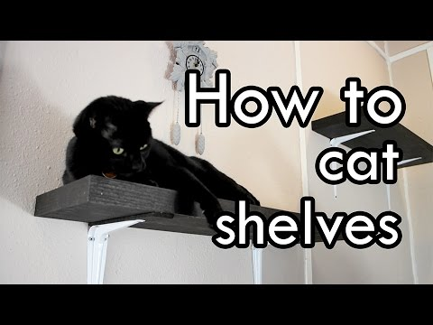 How To Make Cat Shelves Diy Youtube