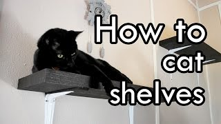 How To Make Cat Shelves : Diy