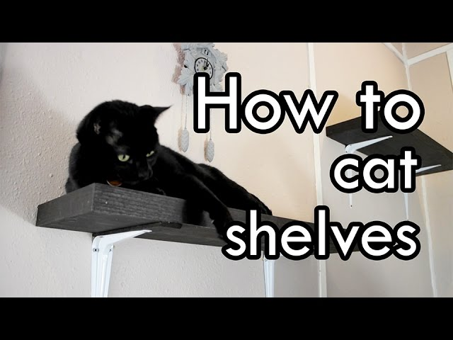 How To Make Cat Shelves Diy Youtube