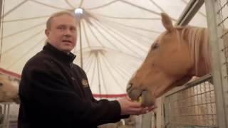 Cyrk ze zwierzętami - konie Cyrku Zalewski
