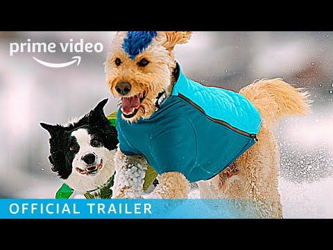 The Pack - Official Trailer   Prime Video
