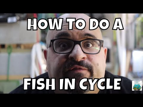 How To Do A Fish In Cycle