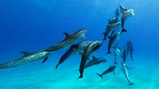 Dolphin Tales 4/2016 - Summer with Wild Dolphins in Bimini