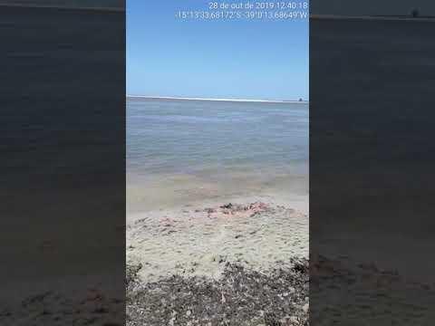 Manchas de óleo chegam em praia de Una 2