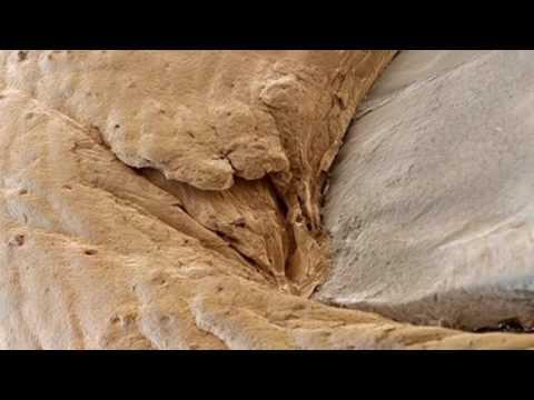 Человеческий ноготь Под микроскопом
