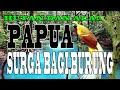 Keindahan Alam Hutan Papua Surga Bagi Semua Burung Alam Indonesia  Mp3 - Mp4 Download