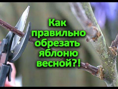 Как обрезать яблоню весной?!