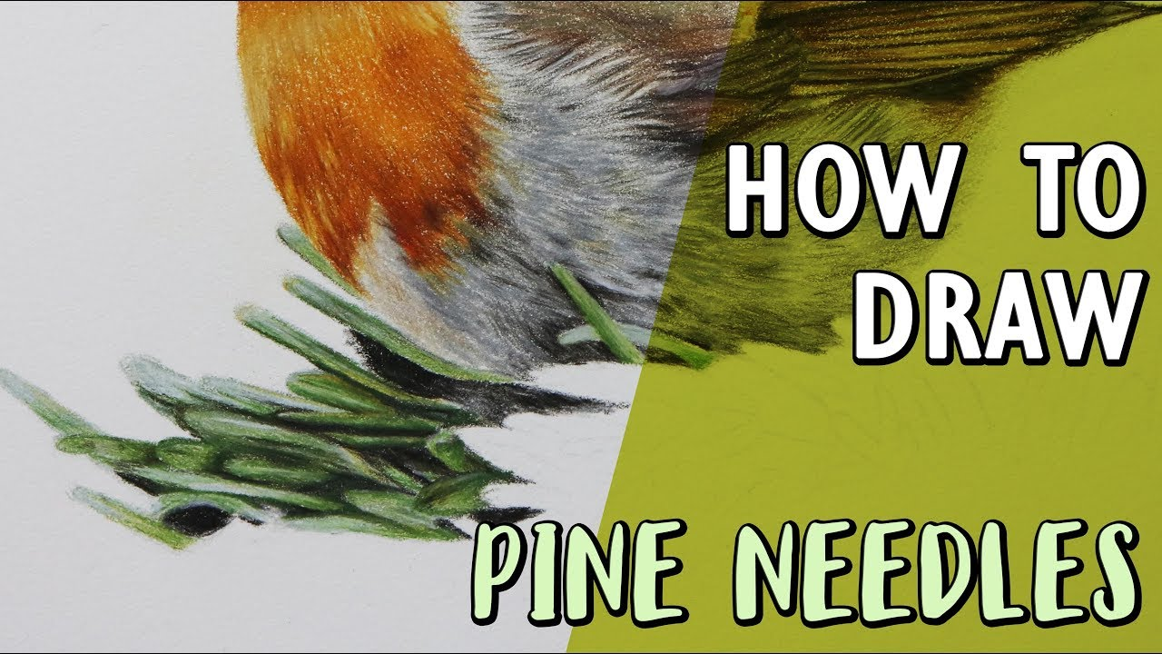 HOW TO DRAW PINE NEEDLES | Coloured Pencil Drawing ...
